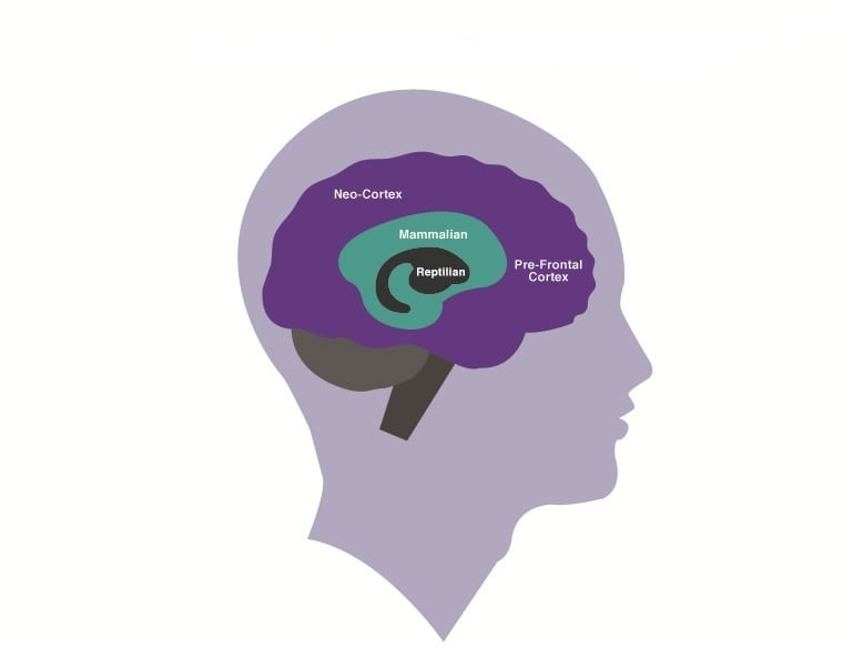 Basic Parts of the Brain - Copyright Christine Comaford Assoc 2012